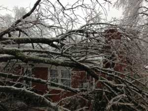 does homeowners insurance cover tree damage and removal?