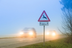 7 Safety Tips to Avoid Deer Collision