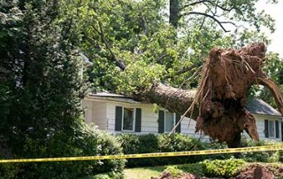 Homeowners Insurance Fallen Trees