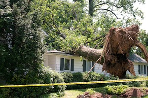 What You should Know About Fallen Trees and Homeowners Insurance