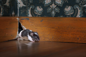Does Your Homeowners Insurance Cover Damage from Animals and Pests?