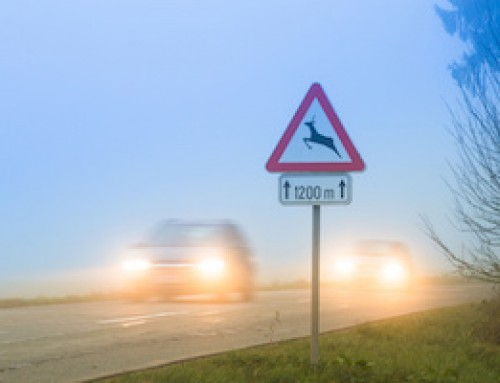 Safety Tips to Avoid a Deer Collision